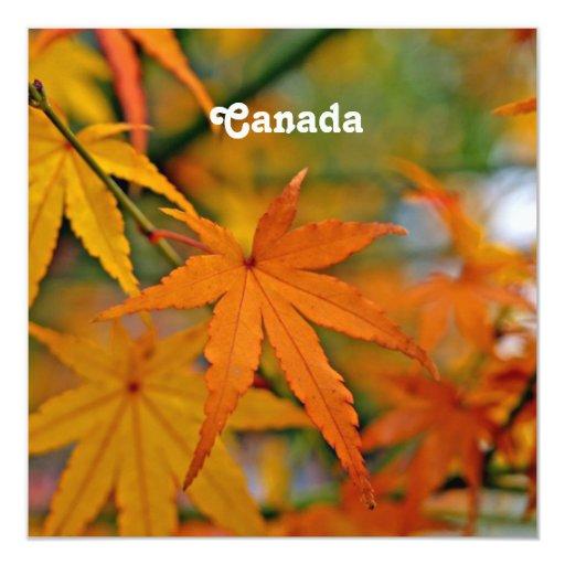 """Arce canadiense invitación 5.25"""" x 5.25"""""""