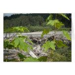 Arce del río del carbono tarjetón
