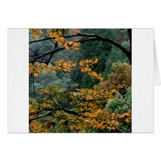Arce gran Tennessee ahumado del otoño de la montañ Tarjeta De Felicitación
