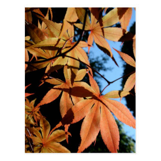 Arce japonés (2) - colores del otoño tarjeta postal