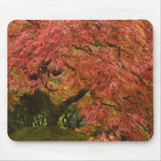 Arce japonés en color de la caída mousepad