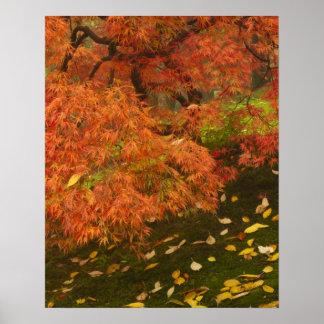Arce japonés en el color 2 de la caída impresiones