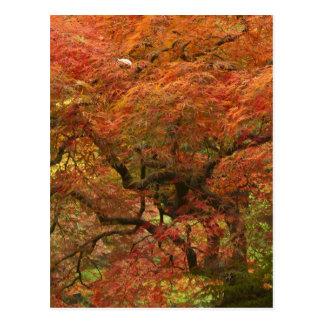 Arce japonés en el color 4 de la caída postal