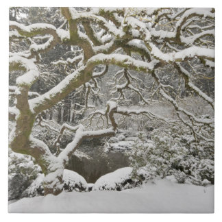 Arce japonés nevado 2 azulejo cuadrado grande