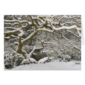 Arce japonés nevado 2 tarjeta de felicitación