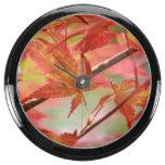 Arce japonés relojes aqua clock