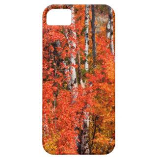 Arce rojo (Acer Rubra) y álamos tembloses Funda Para iPhone SE/5/5s
