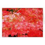 Arce rojo japonés tarjeta