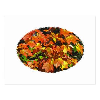 Arce rojo otoño postal