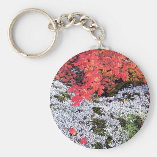 Arce y liquenes de vid del otoño llavero redondo tipo pin