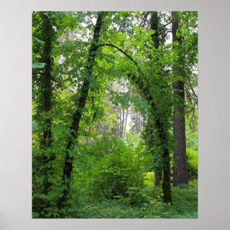 """Arch"", Alder Tree Forest Print"