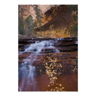 Archangel cascades in the Left Fork of the Poster