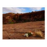Arches Slickrock and Evening Primrose Landscape Postcard