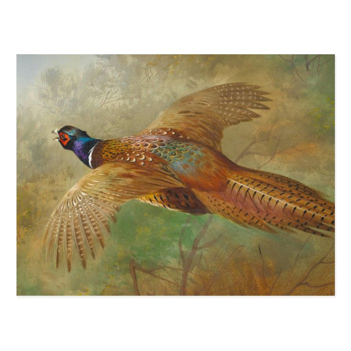 Archibald Thorburn Flying pheasant CC0583 Postcard