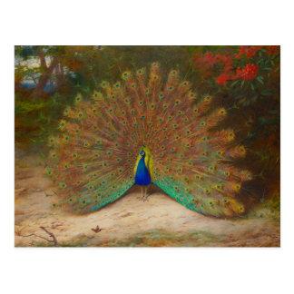 Archibald Thorburn Peacock Postcard