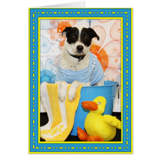 Archie - Jack Russell Rat Terrier Mix -6
