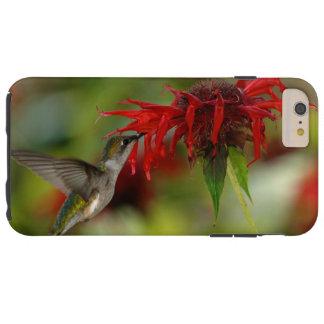 Archilochus Rubí-Throated Colubris del colibrí Funda Resistente iPhone 6 Plus