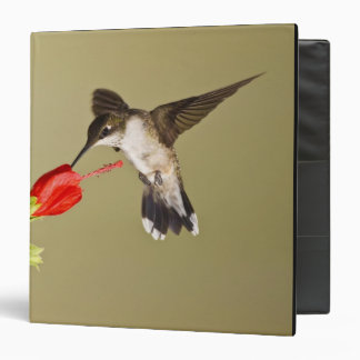 "Archilochus Rubí-throated del colibrí Carpeta 1 1/2"""