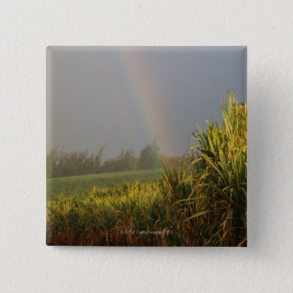 Arching Rainbow Button