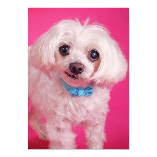 """Arco azul en perro blanco lindo invitación 5"""" x 7"""""""