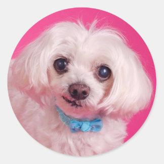 Arco azul en perro blanco lindo pegatina redonda