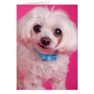 Arco azul en perro blanco lindo tarjeta de felicitación