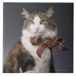Arco de la tela escocesa del gato de Tabby que Azulejo Cuadrado Grande