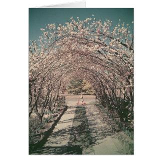 Arco del flor en Canberra - retra Tarjeta De Felicitación
