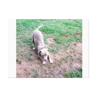 Arco del pitbull I a mi amo Impresión En Lienzo Estirada