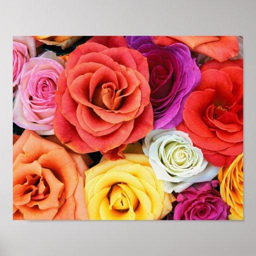 Arco iris de rosas póster