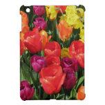 Arco iris de tulipanes