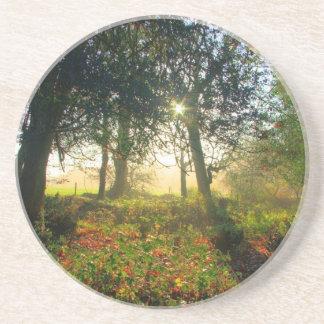 Arco iris del bosque posavasos diseño