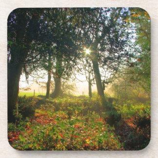 Arco iris del bosque posavasos