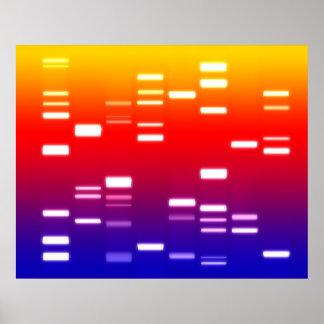 Arco iris del código genético de la DNA Póster