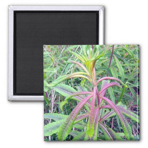 Arco iris del imán de los colores