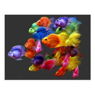 Arco iris del pez papagayo postal