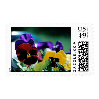 Arco iris del sello de Pansys