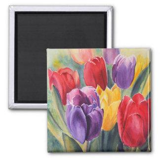 Arco iris del tulipán imán cuadrado