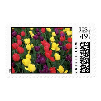 Arco iris del tulipán sellos