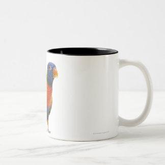 Arco iris femenino Lorikeet - Trichoglossus Tazas De Café
