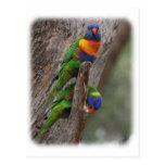 Arco iris Lorikeet 9Y543D-004 Tarjeta Postal