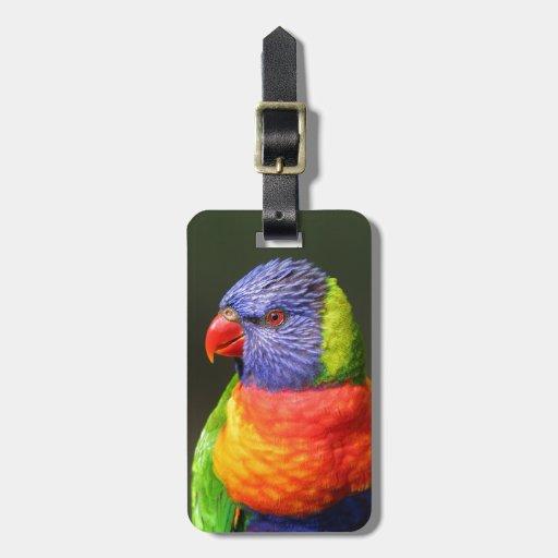 Arco iris Lorikeet Etiquetas De Equipaje