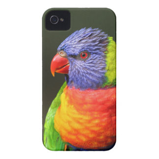 Arco iris Lorikeet iPhone 4 Case-Mate Protectores