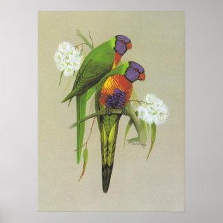 Arco iris Lorikeet - haematodus del Trichoglossus Impresiones