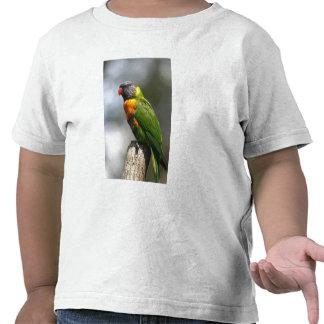 Arco iris Lorikeet (haematodus del Trichoglossus Camiseta