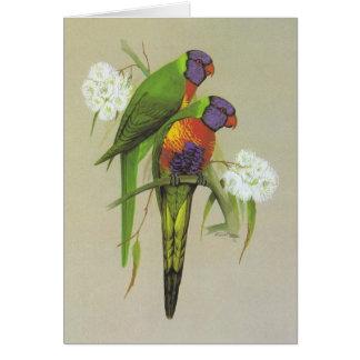 Arco iris Lorikeet - haematodus del Trichoglossus Tarjeta De Felicitación