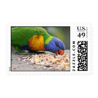 Arco iris Lorikeet que come la semilla del pájaro Sello