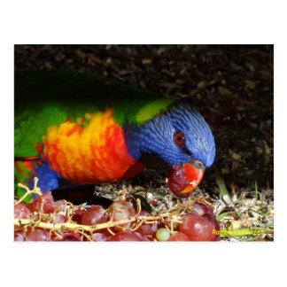 Arco iris Lorikeet Postales