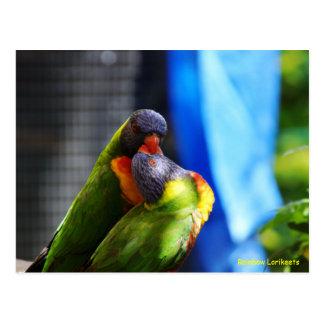 Arco iris Lorikeets Tarjeta Postal