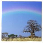 Arco iris y árbol africano del baobab, Adansonia Azulejo Cuadrado Grande